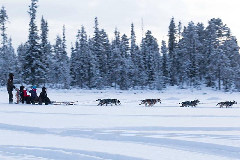 image Camp Ripan chiens