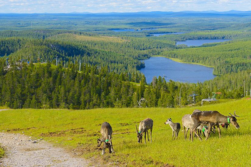 image Finlande Renne montagnes  fo