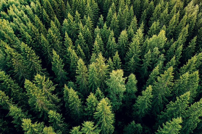 image Finlande vue aerienne de la foret 29 it_923623146