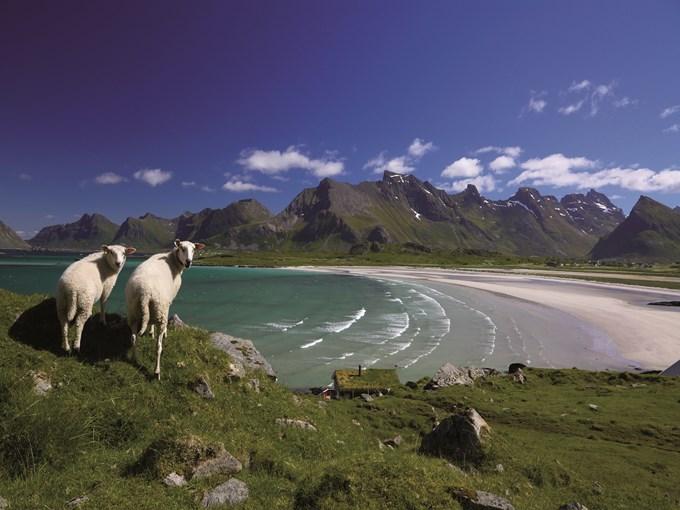image Norvege iles lofoten plage moutons