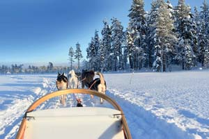 vignette Finlande chien traineau