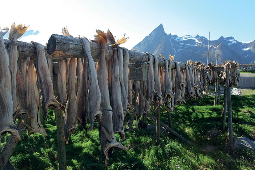 (image) image Morue sechee dans les Lofoten 36 it 517500237